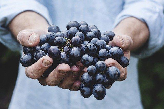 The Balance of Harvest