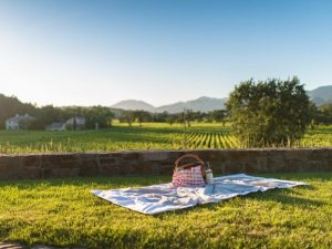 Great Places to Picnic in Napa Valley P
