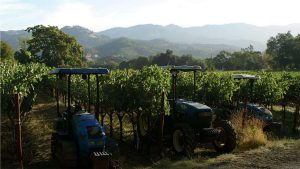 Which Appellation of the Napa Valley is Right For You? P