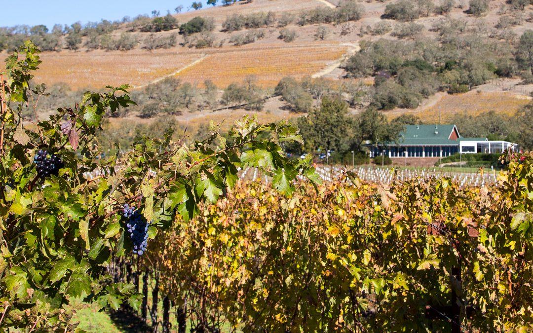 The Mumm Napa Winery: French Tradition, California Style P