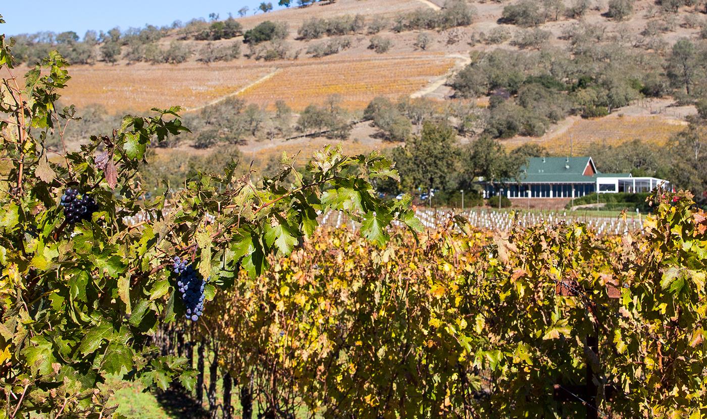 the mumm napa winery french tradition, california style